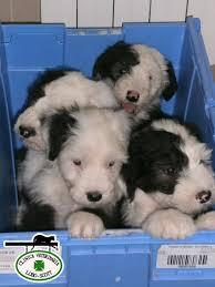 Veterinaria Pluto Vet & Pets